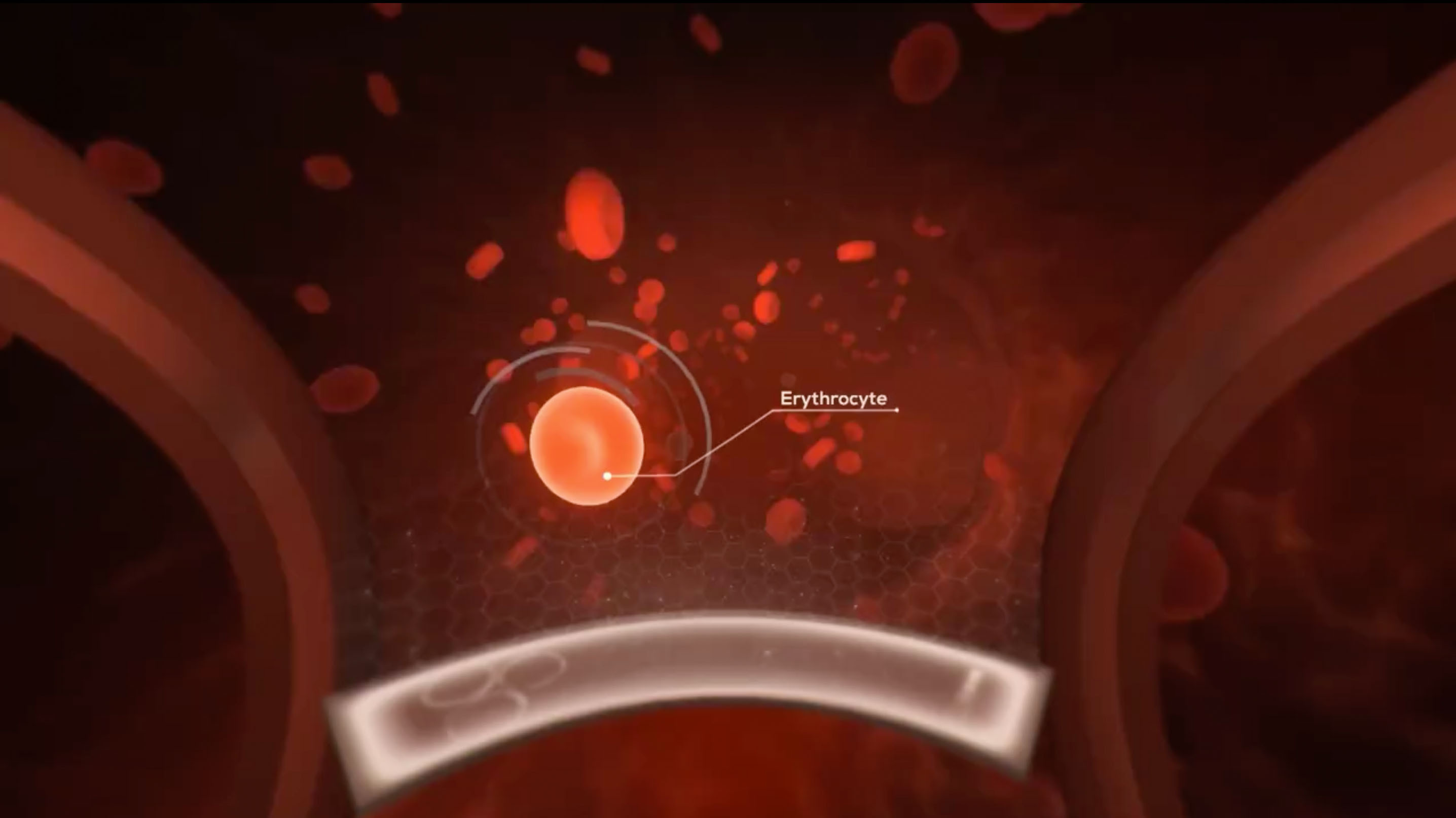 The Virtual Reality Education Erythrocyte