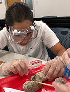 Student participates in a hands-on simulation during the NYLF Pathways to STEM Alumni program